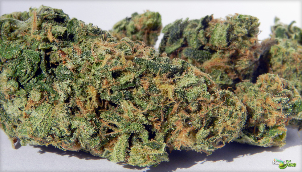 Blueberry Kush Marijuana Strain