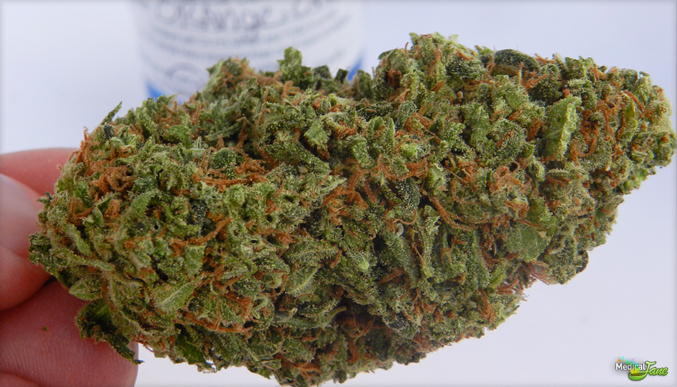 Orange Crush Marijuana Strain