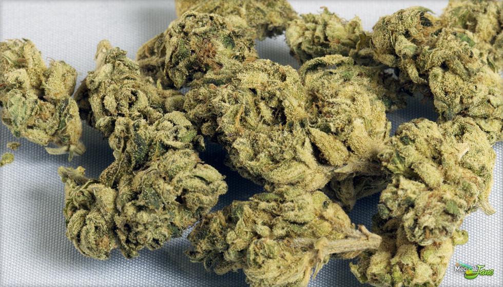 Royal Kush Marijuana Strain (Review)