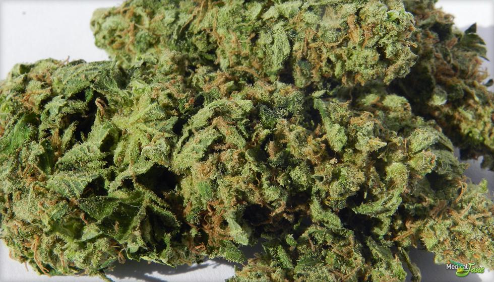Sour Jack Marijuana Strain