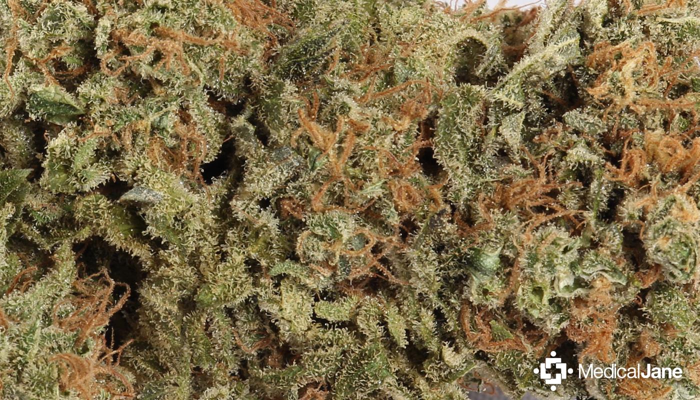 Atomic Northern Lights Marijuana Strain