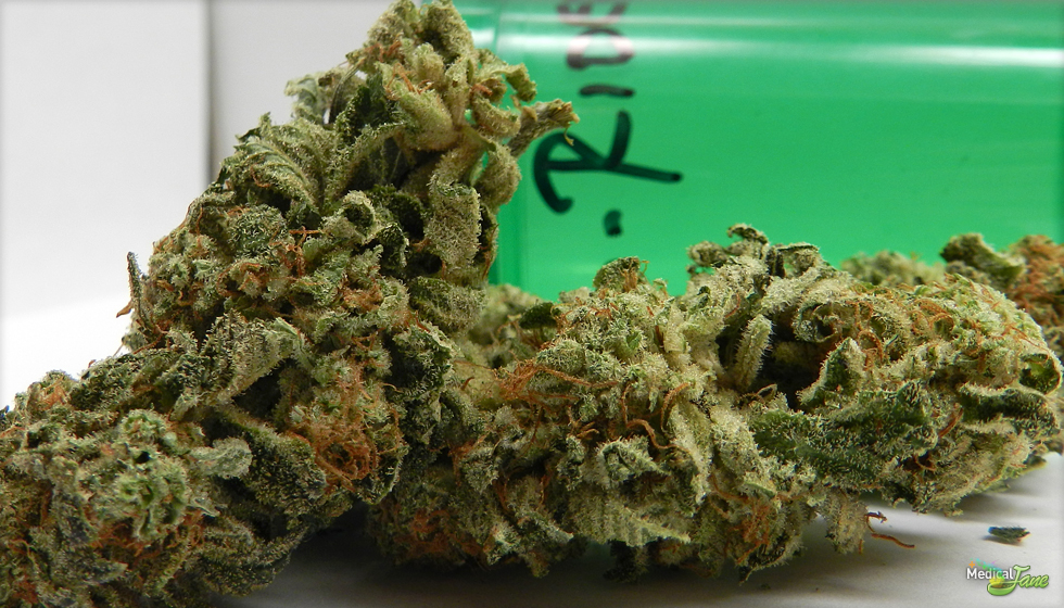 Ghost Rider Marijuana Strain