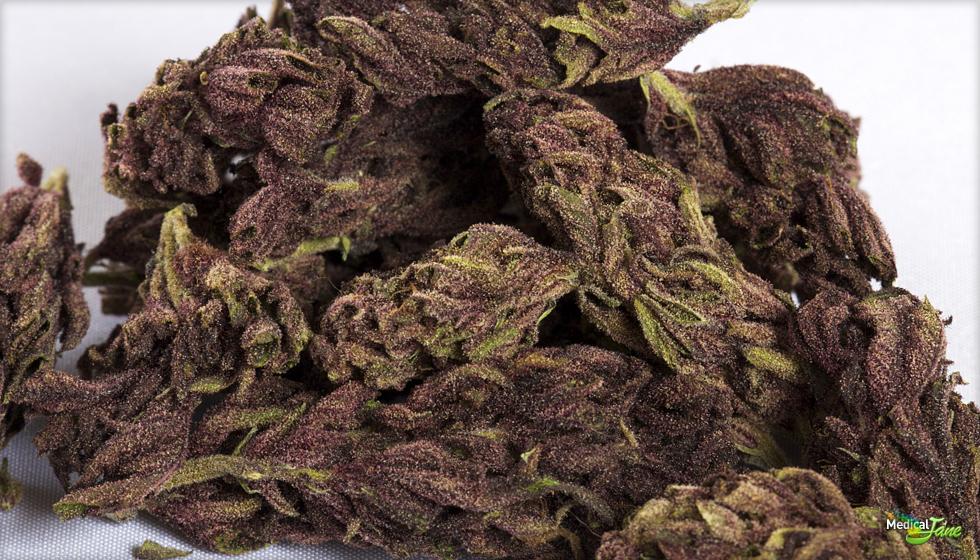 Night Shade Marijuana Strain
