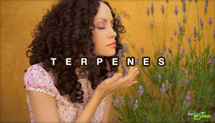Terpenes 101: What Are They And What Do They Do?