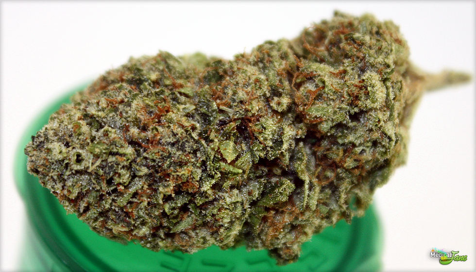 Elite OG Marijuana Strain (Review)