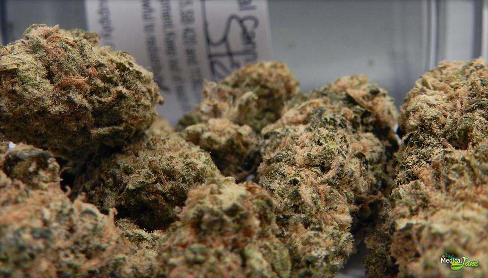 Sensi Star Marijuana Strain