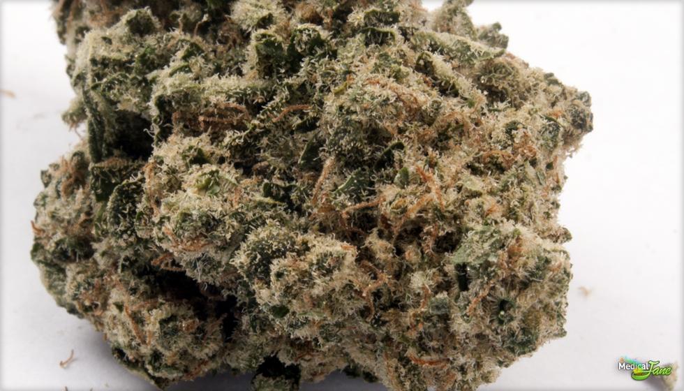 Green Ribbon Marijuana Strain