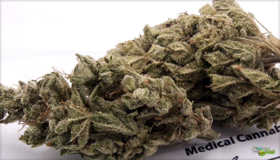 SAGE Marijuana Strain