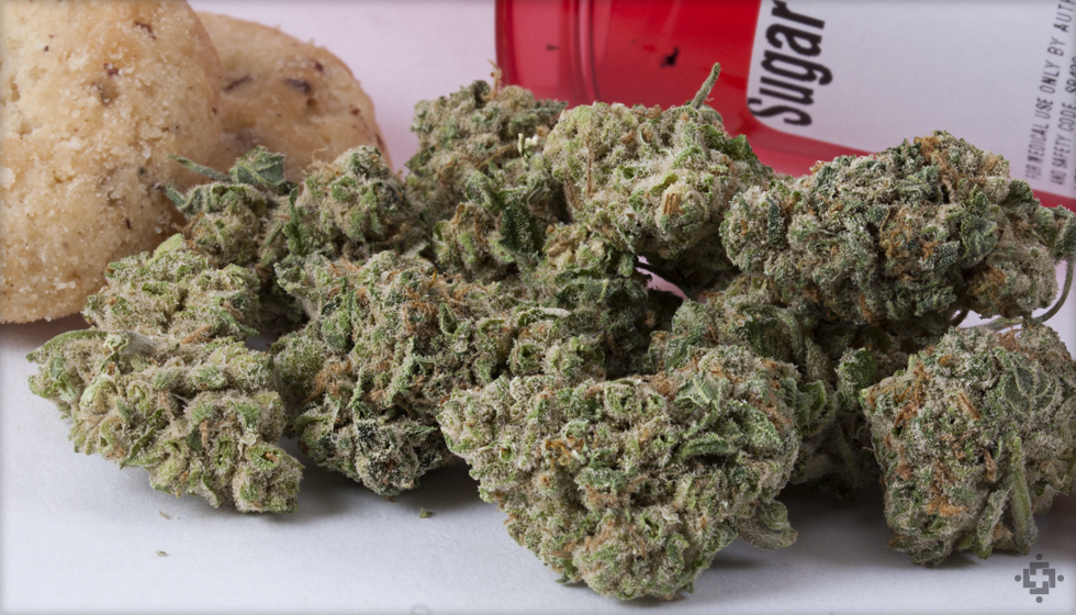 Sugar Cookie Marijuana Strain
