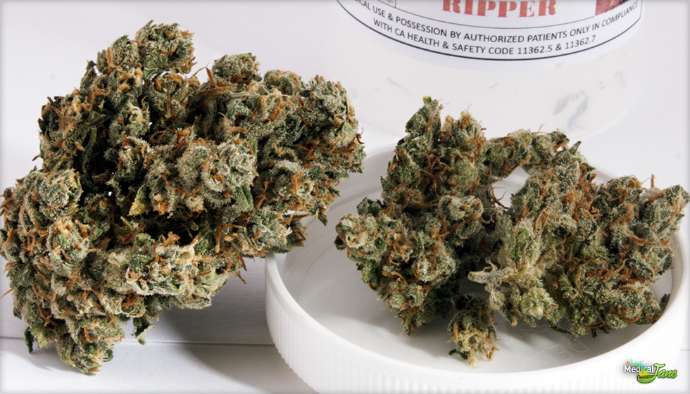 Jack The Ripper Marijuana Strain