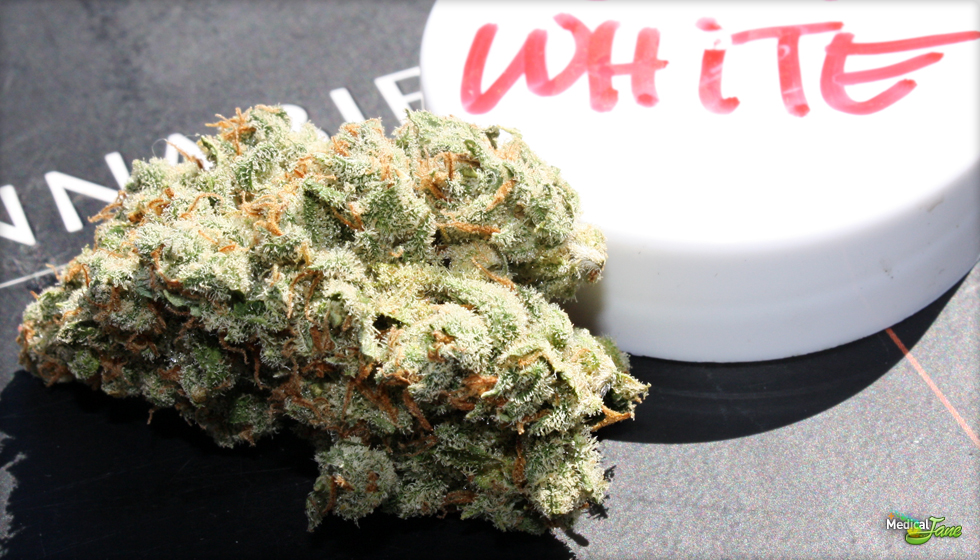 Jack White Marijuana Strain