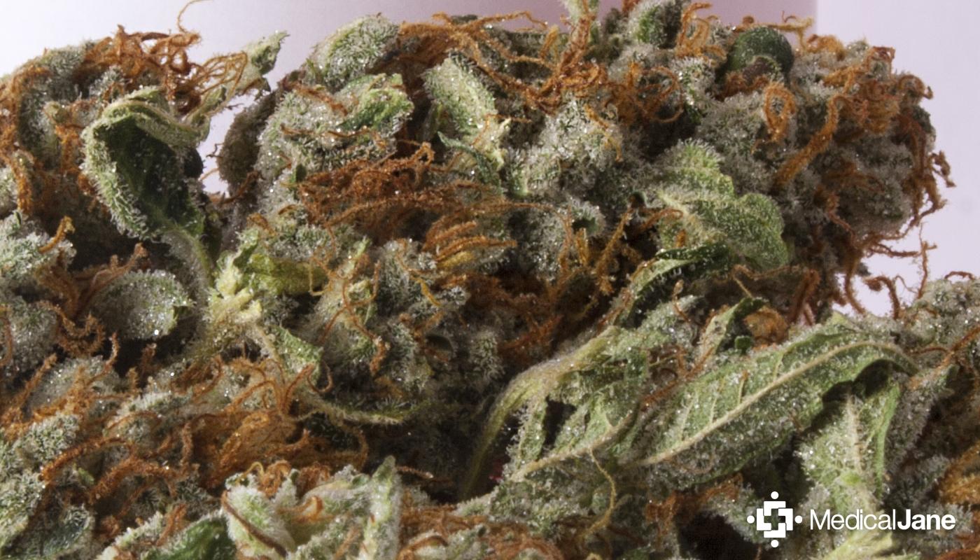 Lemon OG Kush Marijuana Strain