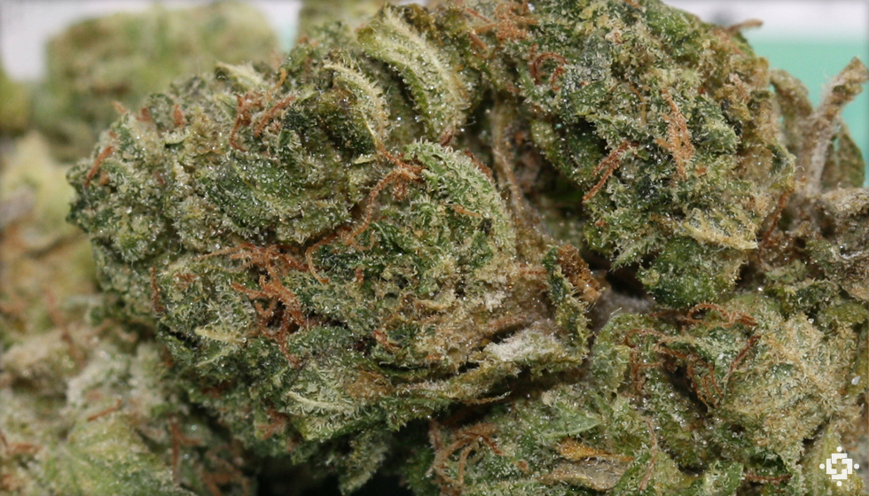 Sour Headband Marijuana Strain
