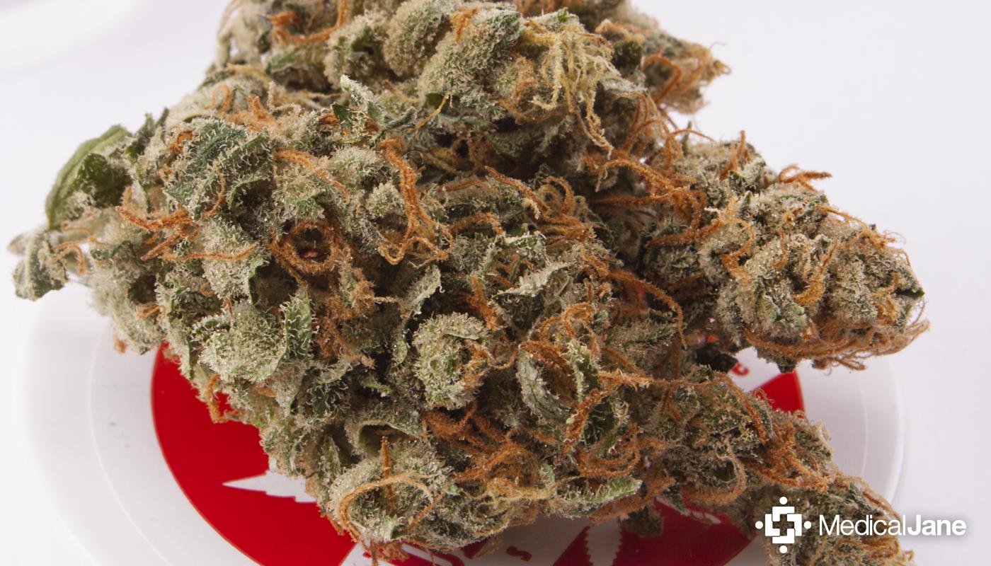 Vortex Marijuana Strain