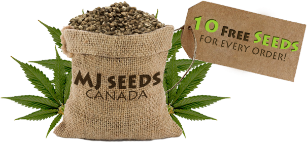 Logo for MJ Seeds Canada