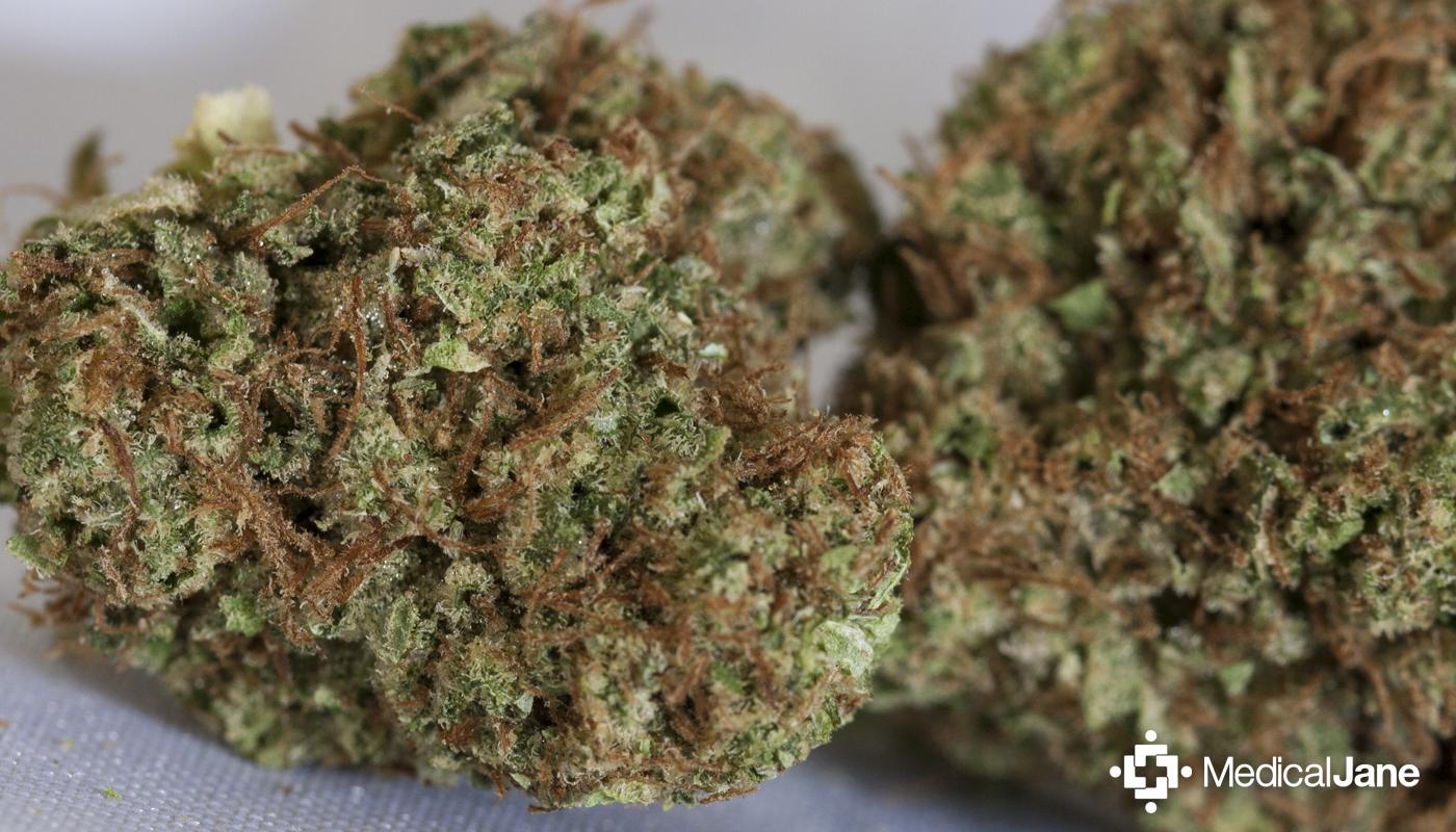 Pine OG Marijuana Strain