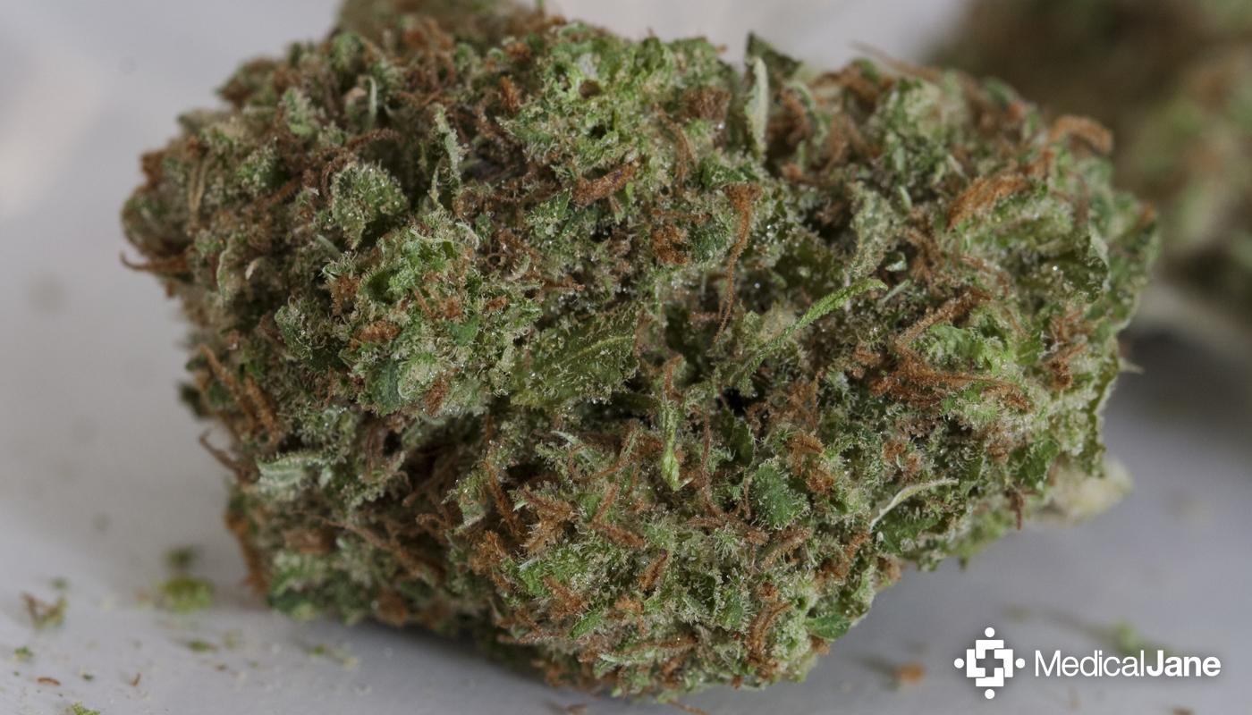 Kyle Kushman's Strawberry Cough Marijuana Strain