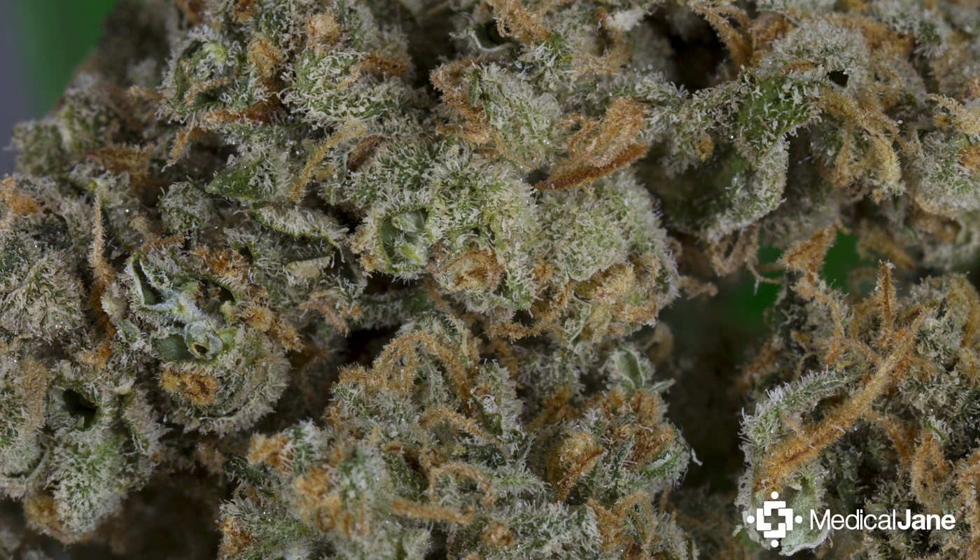 Green Crystal Marijuana Strain