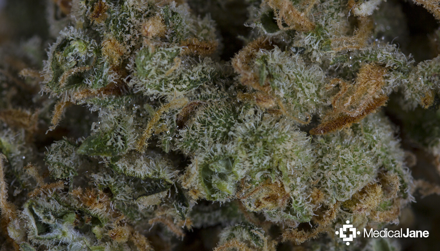 Green Crystal Strain: An Uplifting Hybrid With Euphoric Effects