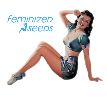 Logo for Feminizedseed.co.uk