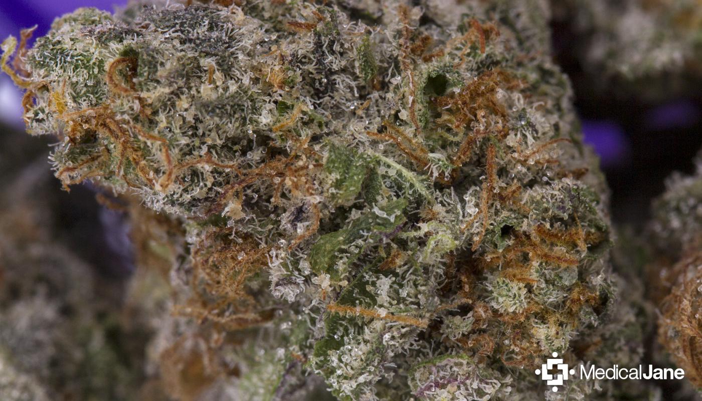 Mr. Nice Marijuana Strain