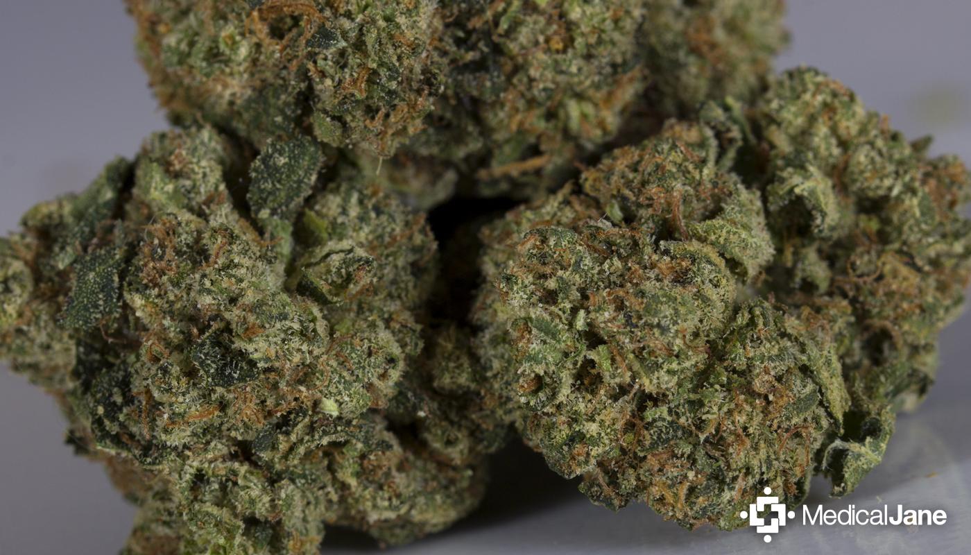 Presidential OG Marijuana Strain
