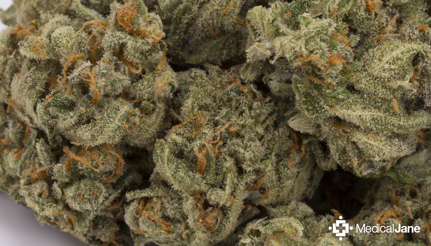 Cracker Jack Marijuana Strain
