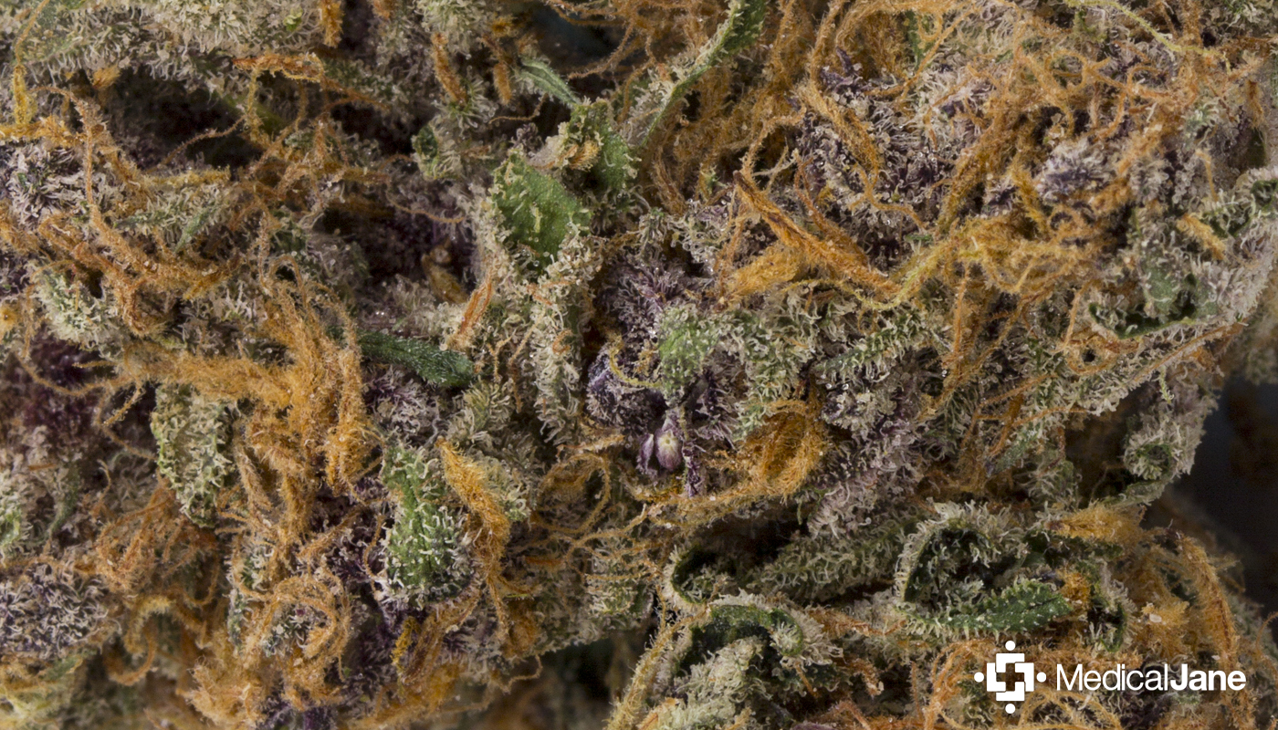 candyland marijuana strain review