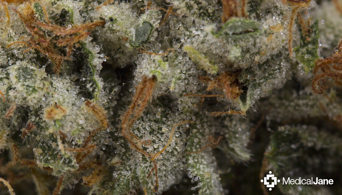 The Asteroid OG Strain Is A Spacey Hybrid