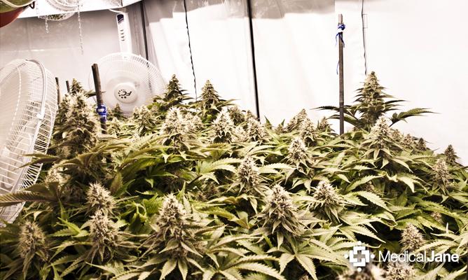 Small Grow Room Heayer