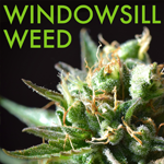 Logo for Windowsill Weed