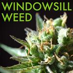 Logo for Windowsill Weed