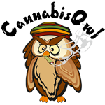 Logo for Cannabis Owl